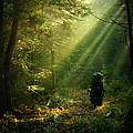 Adirondack Rapture by Matt Kirk