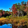 Adirondack Stream In Autumn by David Patterson