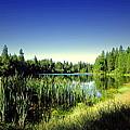 Admiring The Beauty At Woodbridge Lake by Joyce Dickens