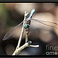 Adorable Dragonfly With Border by Carol Groenen