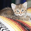 Adorable Kitten by Michelle Powell