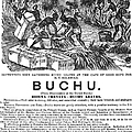 Advertisement: Buchu, 1871 by Granger