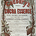 Advertisement For Cadburs Cocoa Essence From The Graphic by English School