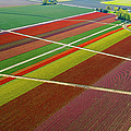 Aerial View Of Colorful Tulip Fields by Pete Saloutos