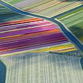 Aerial View Of Flower Fields In Spring by Frans Sellies