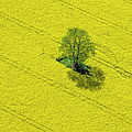 Aerial View Of Oilseed Rape Field by Cinoby