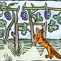 Aesop The Fox & The Grapes by Granger