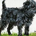 Affenpinscher Dog by Olde Time  Mercantile