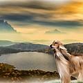 Afghan Hound by Tyler Robbins