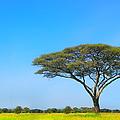 Africa by Sebastian Musial