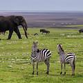 Africa Tanzania African Elephant by Ralph H. Bendjebar
