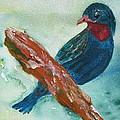 #african Bluebird by Dottie List