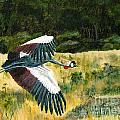 African Crowned Crane Painting by Timothy Hacker
