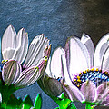 African Daisy Detail by Donna Brown