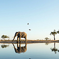 African Elephant At Water Hole, Botswana by Paul Souders