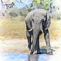African Elephant At Waterhole by Liz Leyden
