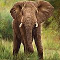 African Elephant by David Stribbling