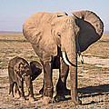African Elephant Mother And Calf by Liz Leyden