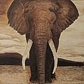 African Elephant by William McCann
