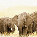 African Elephants  by Don Kuing
