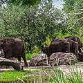 African Elephants  by Zina Stromberg