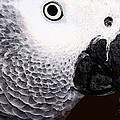 African Gray Parrot Art - Seeing Is Believing by Sharon Cummings