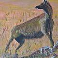 African Hyena by Eric Johansen