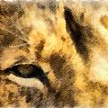 African Lion Eyes by Angelina Vick
