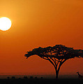 African Morning by Jim Southwell
