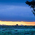 African Panoramic Sunset Landscape by Gary Keesler