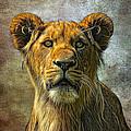 African Queen by Gary D Baker