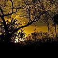 African Sunset by John Stuart Webbstock