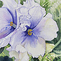 African Violet by Carol Flagg