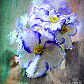 African Violet by Jim Hatch