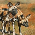 African Wild Dogs by David Stribbling