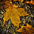 After An Autumn Rain by David Patterson