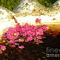 After Bloom by Lew Davis