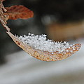 After Snowfall by Nathan Kelly