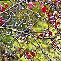 After The Autumn Rain 2 - Digital Paint by Debbie Portwood