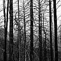 After The Fire by Joe Kozlowski