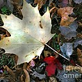 After The Frost by RC DeWinter