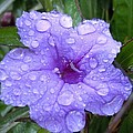 After The Rain #1 by Robert ONeil