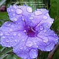 After The Rain #3 by Robert ONeil
