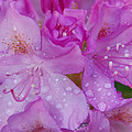 After The Rain by Aimee L Maher ALM GALLERY