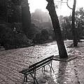 After The Rain by Maureen J Haldeman