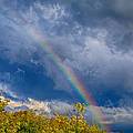 After The Rainstorm by John Hoey