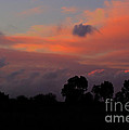 After The Storm by Jacklyn Duryea Fraizer