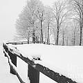 After The Winter Storm by Marcel  J Goetz  Sr