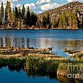 Afternoon At Sprague Lake by Adam Jewell