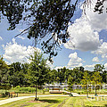 Afternoon At The Park by Joan McCool